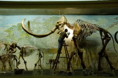 Morrill Hall, featuring Archie the mammoth skeleton. At the University of Nebraska State Museum.