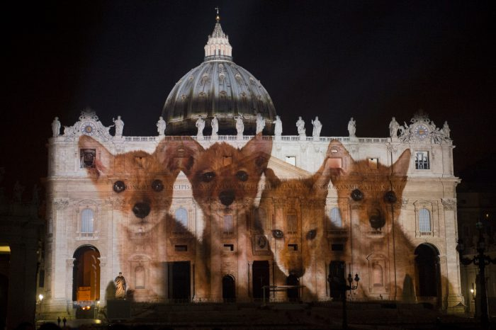 Photo: Coyote pups are projected onto the Vatican in an effort to raise awareness for the extinction crisis.