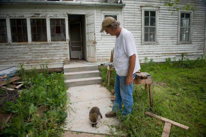 Photo: A man with a baby raccoon at the Dunbar Farm.