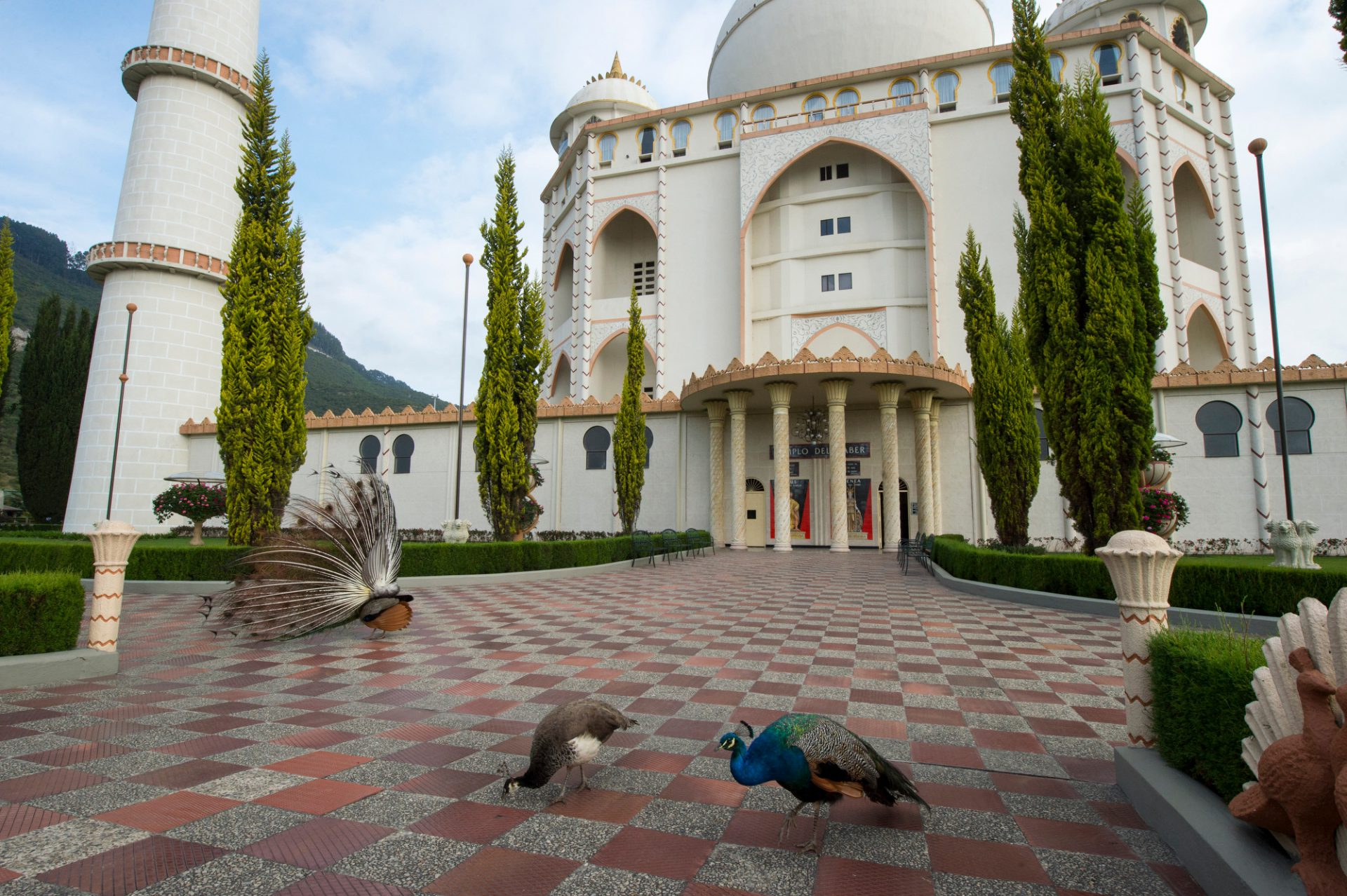 Photo: A peacocks outside the replica of the Taj Mahal at Parque Jaime Duque in Colombia.