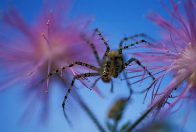 Photo: A spider crawls on purple flowers in Brazil.