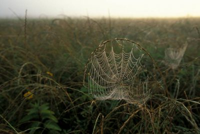 Photo: An intricate spider web at the Attwater's Prairie Chicken National Wildlife Refuge near Eagle Land, Texas.