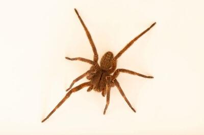 Photo: An unidentified spider at the Membeca Lagos Farm, near Rio de Janeiro, Brazil.