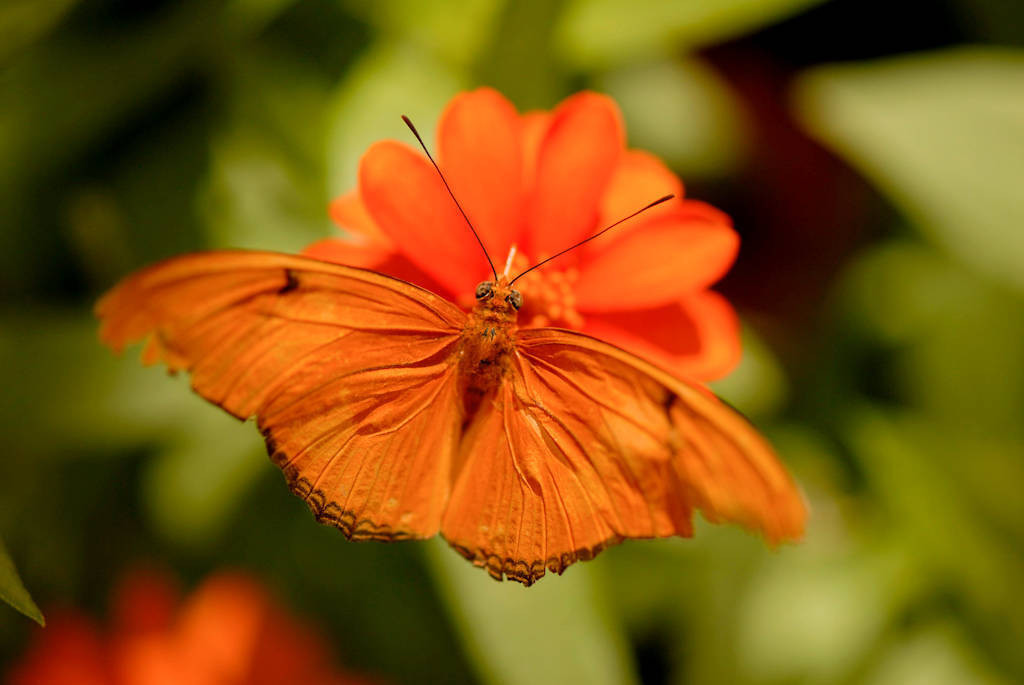 Photo: A julia butterfly at the Butterfly Pavilion at the Lincoln Children's Zoo.