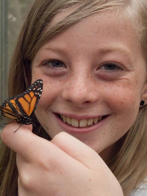 Photo: A girl holds a monarch butterfly at the Lincoln Children's Zoo.