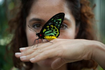 Photo: A birdwind butterfly lands on a woman's hand at the Henry Doorly Zoo, Omaha, Nebraska.