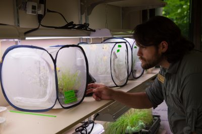 An entomologist looks over the Dakota skipper (Hesperia dacotae) captive breeding area at the Minnesota Zoo
