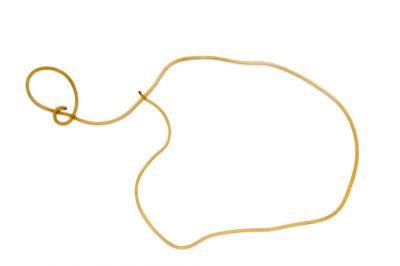 A horsehair worm (Nematomorpha species).