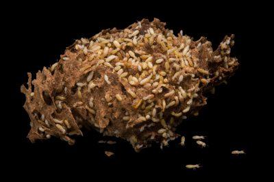 Photo: Termites at Healesville Sanctuary.