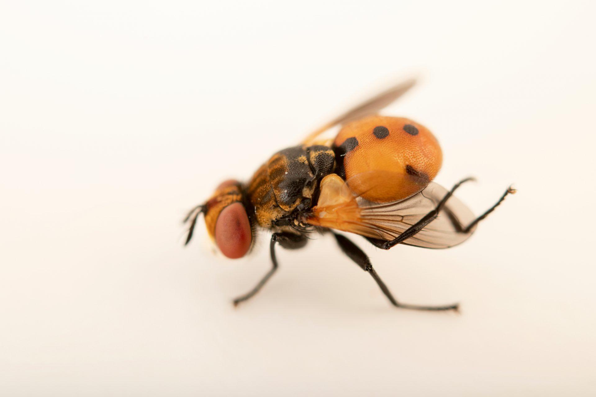 Photo: An unidentified fly at Graham's Quinta dos Malvedos Vineyard.