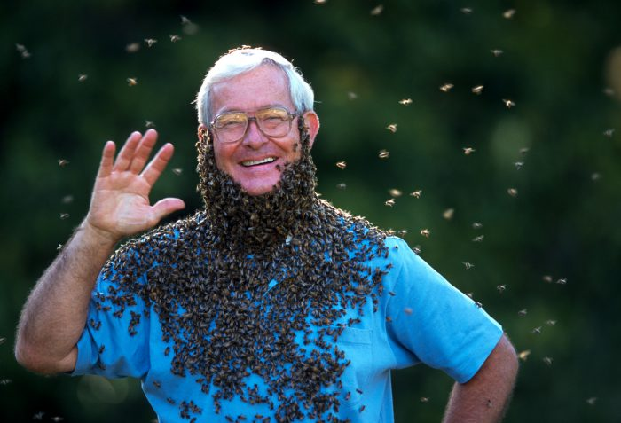 Photo: Dr. Norman Gary, an entomologist and bee wrangler, poses for a portrait wearing a beard of honey bees.