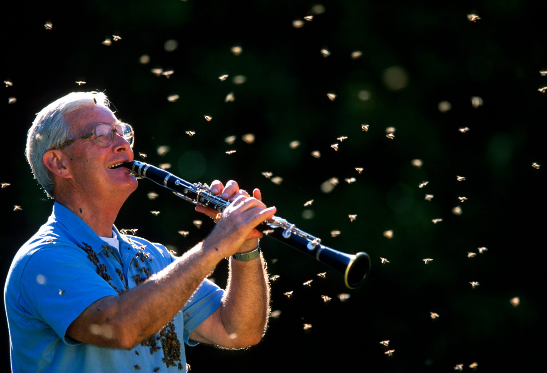 Photo: Dr. Norman Gary, an entomologist and bee wrangler, plays his clarinet while surrounded by some of his bees.