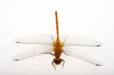 Photo: A dragonfly near Crosslake, Minnesota.