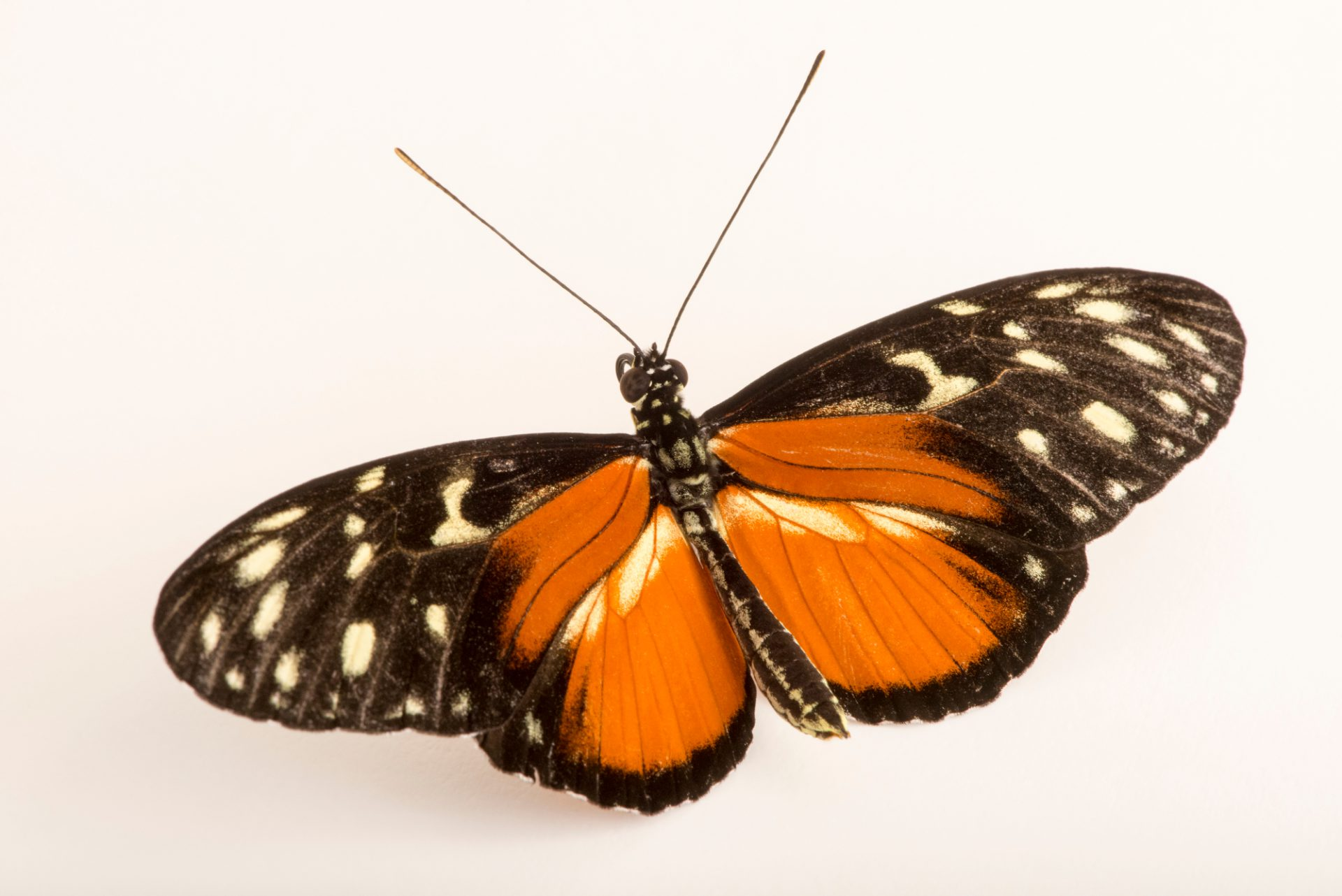 Photo: An unidentified butterfly at the Omaha Zoo.