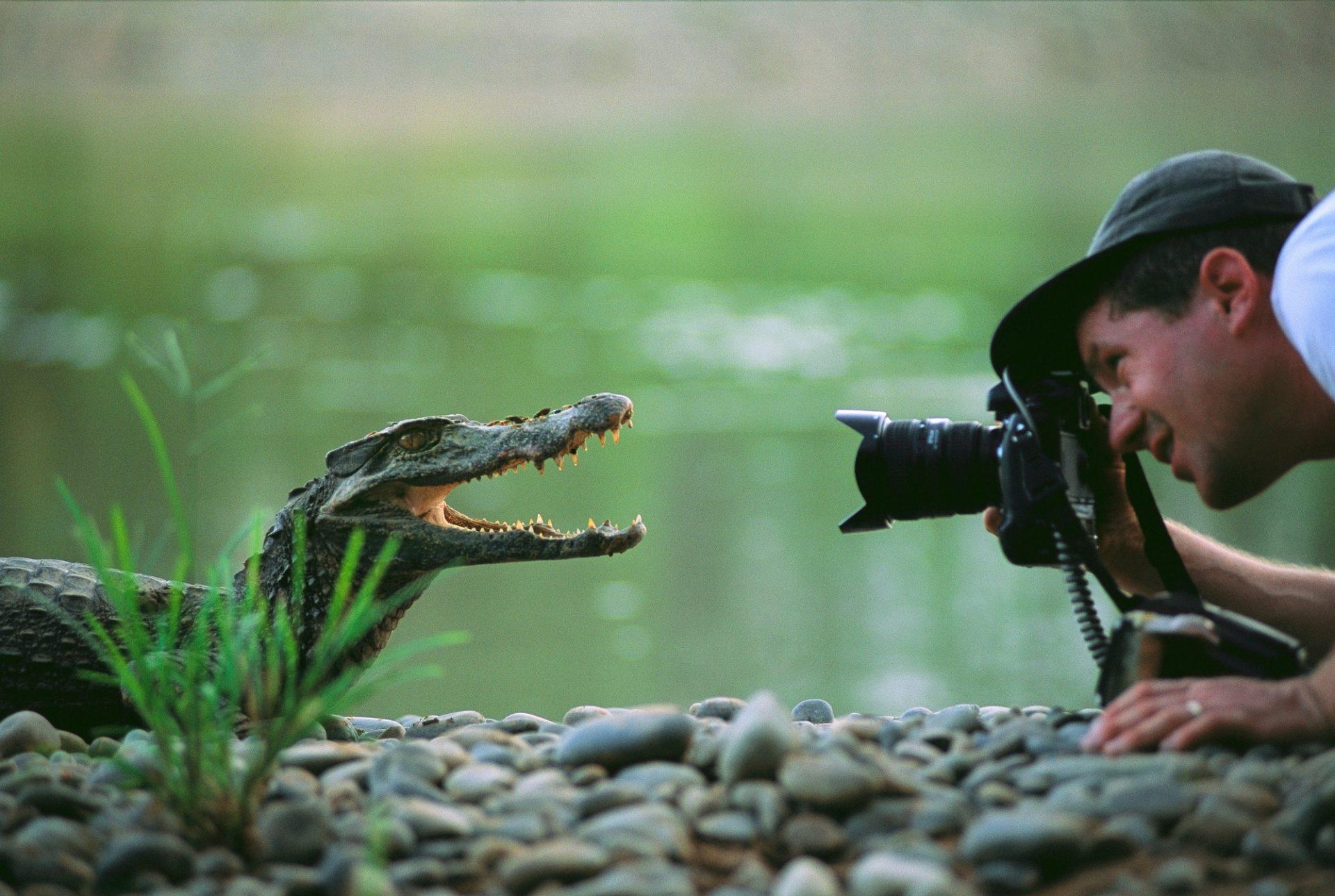Photo: Photographer Joel Sartore inches his way toward a juvenile caiman in Bolivia's Madidi National Park.
