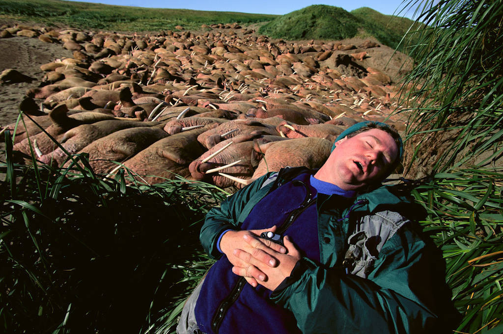 Photo: Photographer Joel Sartore catches a nap next to a walrus-packed beach at Togiak NWR.