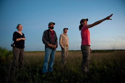 Photo: Biologist scout for federally-endangered birds at Kissemmee Prarie State Park.