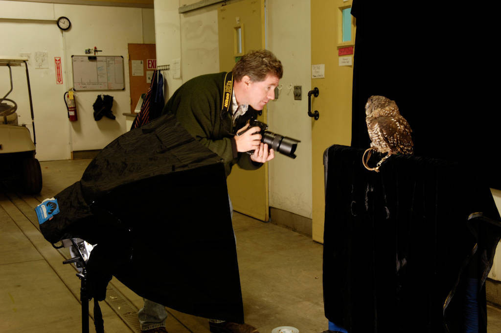 A federally threatened northern spotted owl (Strix occidentalis caurina) being photographed by Joel Sartore.