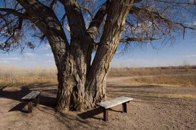 Photo: Bosque del Apache National Wildlife Refuge near San Antonio, New Mexico.