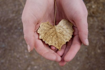 Photo: A woman holds a leaf at Bosque del Apache National Wildlife Refuge in New Mexico.