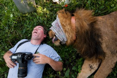 Photo: National Geographic photographer Joel Sartore stops for a quick nap with a lion, tranquilized by researchers, in Uganda's Albertine Rift.
