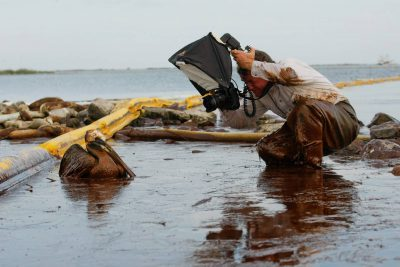 Photo: Joel Sartore on assignment for NGM, by Gerald Herbert/AP. An oil covered pelican sits stuck in thick beached oil at Queen Bess Island in Barataria Bay, just off the Gulf of Mexico in Plaquemines Parish, La., Saturday, June 5, 2010.