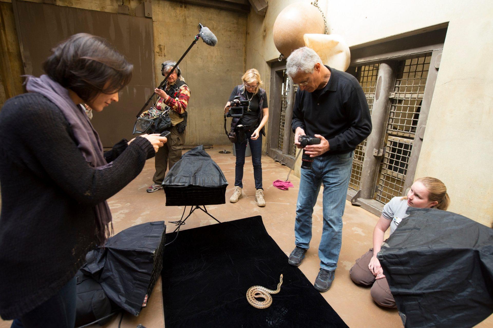 Louie Psihoyos and his crew film the Santa Cruz gopher snake (Pituophis catenifer pumilis) at the Santa Barbara Zoo.