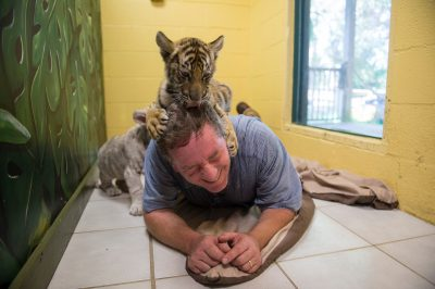 Picture of Joel Sartore with eight-week-old Bengal tiger cubs (Panthera tigris tigris) at the Alabama Gulf Coast Zoo.