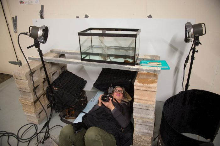 Photo: A staff member tries her hand at amphibian photography at the Saint Louis Zoo.
