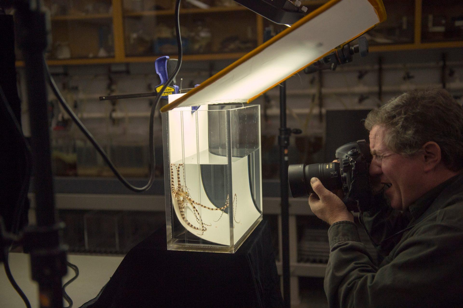 Photo: Scene from the Photo Ark shoot at the Monterey Bay Aquarium.