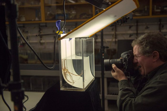 Photo: Scene from the Photo Ark shoot at the Monterey Bay Aquarium.