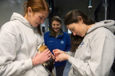 Photo: Zookeepers with a vulnerable, federally threatened male Steller's eider (Polysticta stelleri) at the Alaska SeaLife Center.
