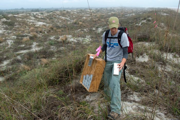 Photo: At Anastasia Island State Park trapping the federally endangered Anastasia Island beach mouse (Peromyscus polionotus phasma).