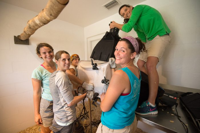 Picture of Staff members assisting with a photo shoot of Ikoto, the last male Sanford's lemur (Eulemur sanfordi) in captivity at the Lemur Conservation Foundation near Myakka City, FL