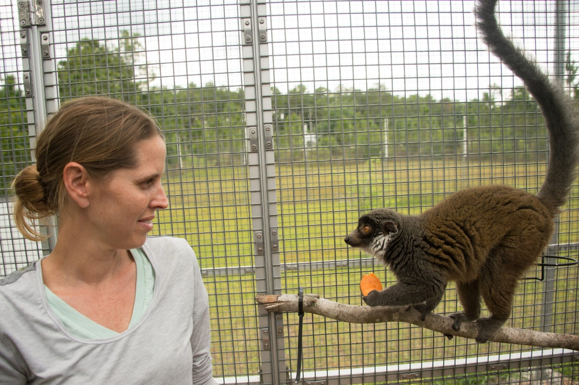 Picture of a staff member with a vulnerable collared lemur (Eulemur collaris) at the Lemur Conservation Foundation.