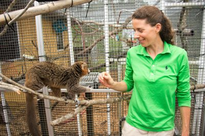 Picture of a conservationist feeding a vulnerable collared lemur (Eulemur collaris) at the Lemur Conservation Foundation.