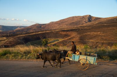 Photo: A cart is driven through the north central Madagascar highlands, where annual, landscape-wide burning is the norm.