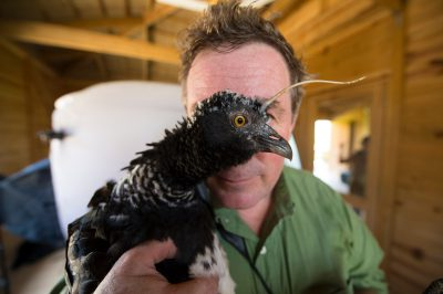 Photo: Joel Sartore with a Horned screamer on assignment at the National Aviary of Colombia.