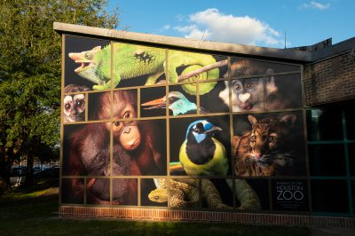 Photo: A wall of Photo Ark images at the Houston Zoo.