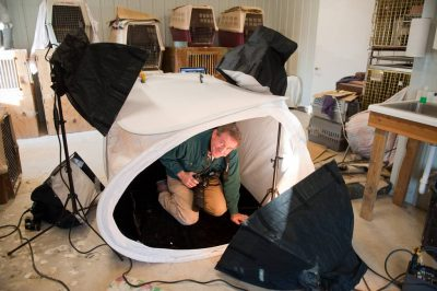 Photo: Joel Sartore models inside a shooting tent at Raptor Recovery Nebraska.