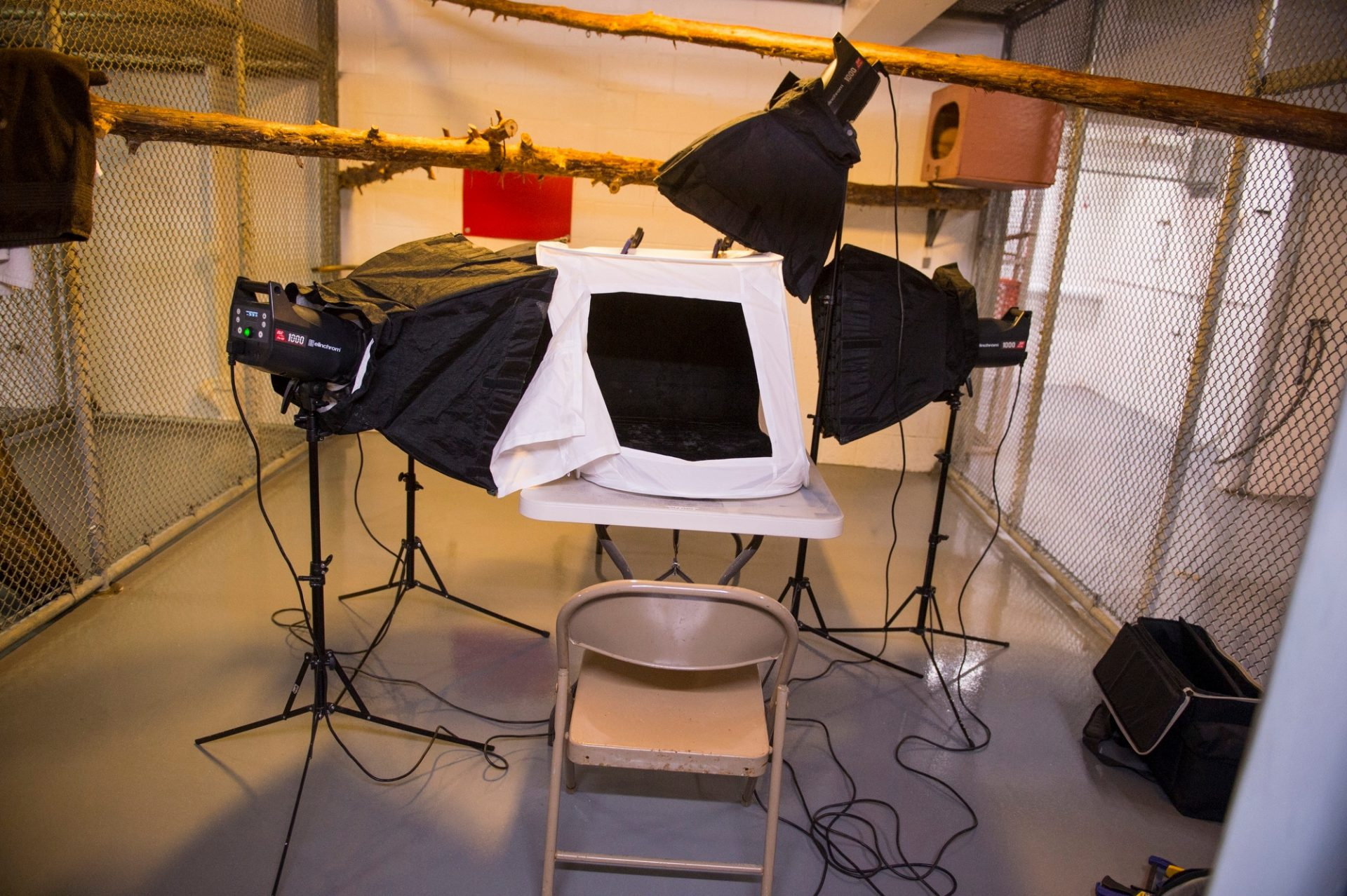 Photo: A light box and softboxes for a shoot at the St. Louis zoo.