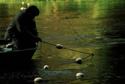 Photo: Native American man fishing for salmon the Hoh river on the Olympic peninsula in Washington.