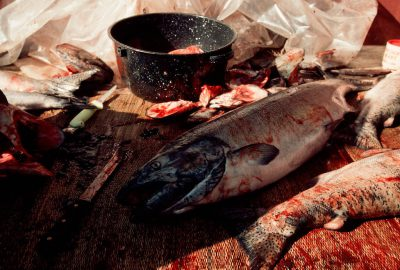 Photo: Salmon are prepared for the evening's feast at the First Salmon Festival and pow wow in Celilo, OR, on the banks of theColumbia River.