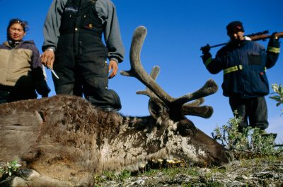 Photo: Native hunters with their recently felled caribou near Nuiqsut, Alaska on the North Slope.