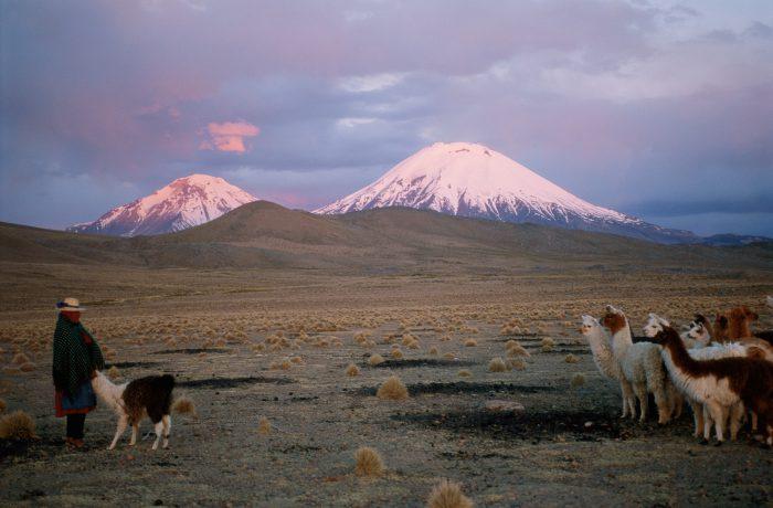 Photo: Aymara woman with her llama herd on the desolate landscape of the high Chilean Atacama desert.