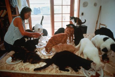 Photo: A woman feeds a large group of cats.