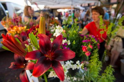 Photo: Flowers are displayed at the Farmer's Market in the historic Haymarket district of Lincoln, Nebraska.