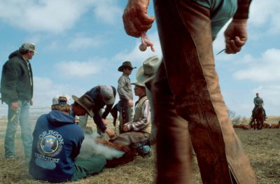 Photo: Branding and castration time at a ranch in the Nebraska Sandhills.