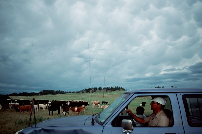 Photo: Carl Simmons checks cattle on his ranch near Valentine, NE.