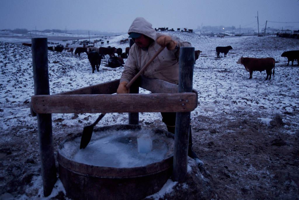 Photo: John Engelhaup breaks ice from a cattle tank in sub-freezing weather at a feedlot near Springfield, Nebraska.